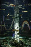 Океанариум санкт петербург - океанариумы - фото 72479