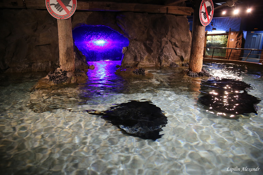 Океанариум coex aquarium